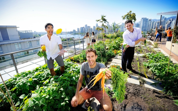 the-smart-way-to-create-an-edible-garden-in-your-rooftop