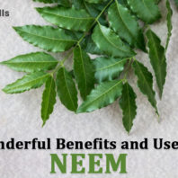 Wonderful Benefits and Uses of Neem