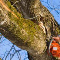Hazardous Tree Removal