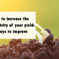 How to increase the productivity of your yield: 7 ways to improve