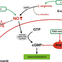 PDE-5 Inhibitors in the Treatment of Erectile Dysfunction