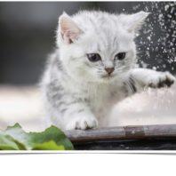 White kittens for sale